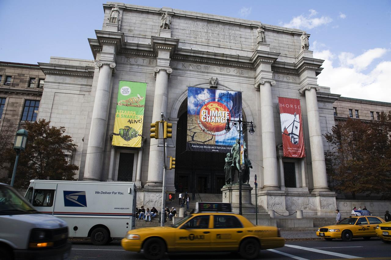 natural history museum new york