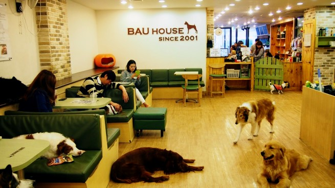 Bau House Dog Cafe Seoul 2