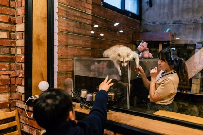 Raccoon Cafe Seoul 3