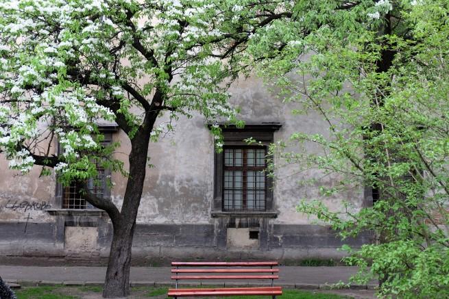 Lviv Ukrayna (1)