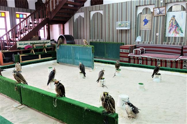 Doha Falcon Souq