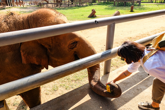 Elephant Nature Park Tayland