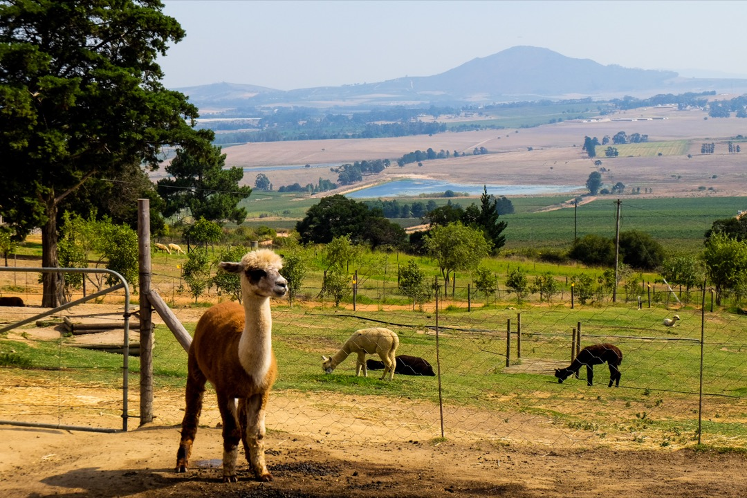 Cape Town Alpaca Loom