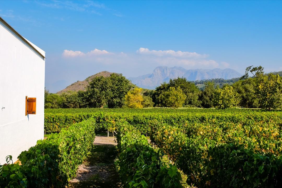 Cape Town Şarap