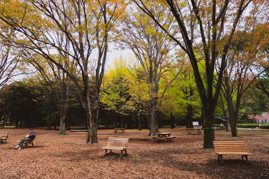 Yayogi Park Tokyo